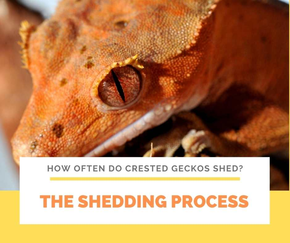The Shedding Process