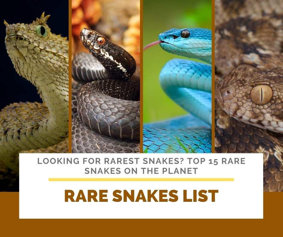 Rare Snakes List