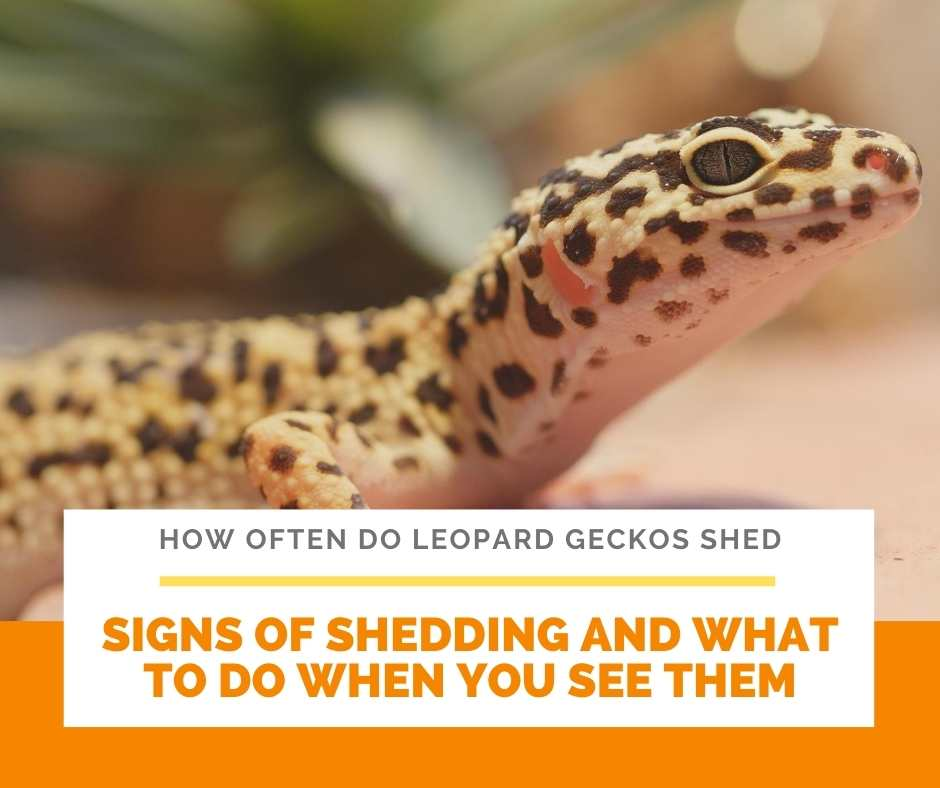 Signs Of Shedding And What To Do When You See Them