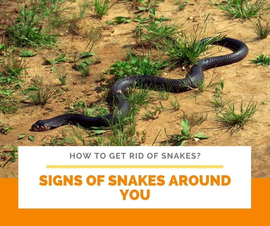 Signs Of Snakes Around You