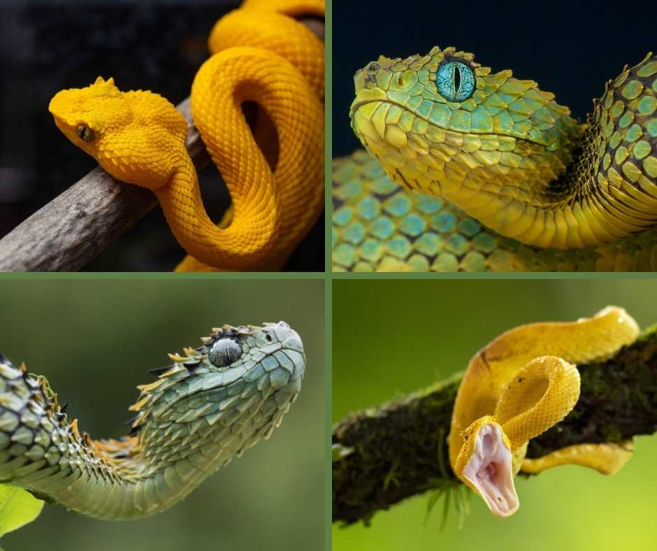What Are Small Arboreal Snakes?