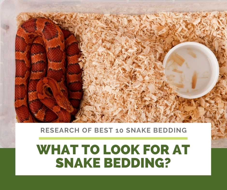 What To Look For At Snake Bedding?