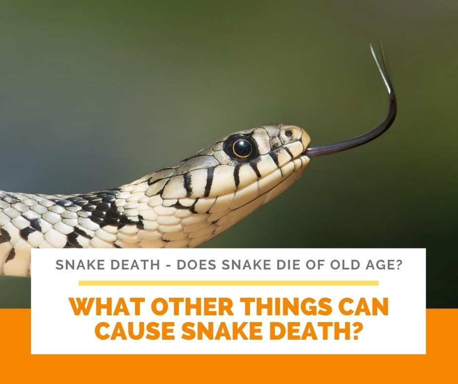 What Other Things Can Cause Snake Death?