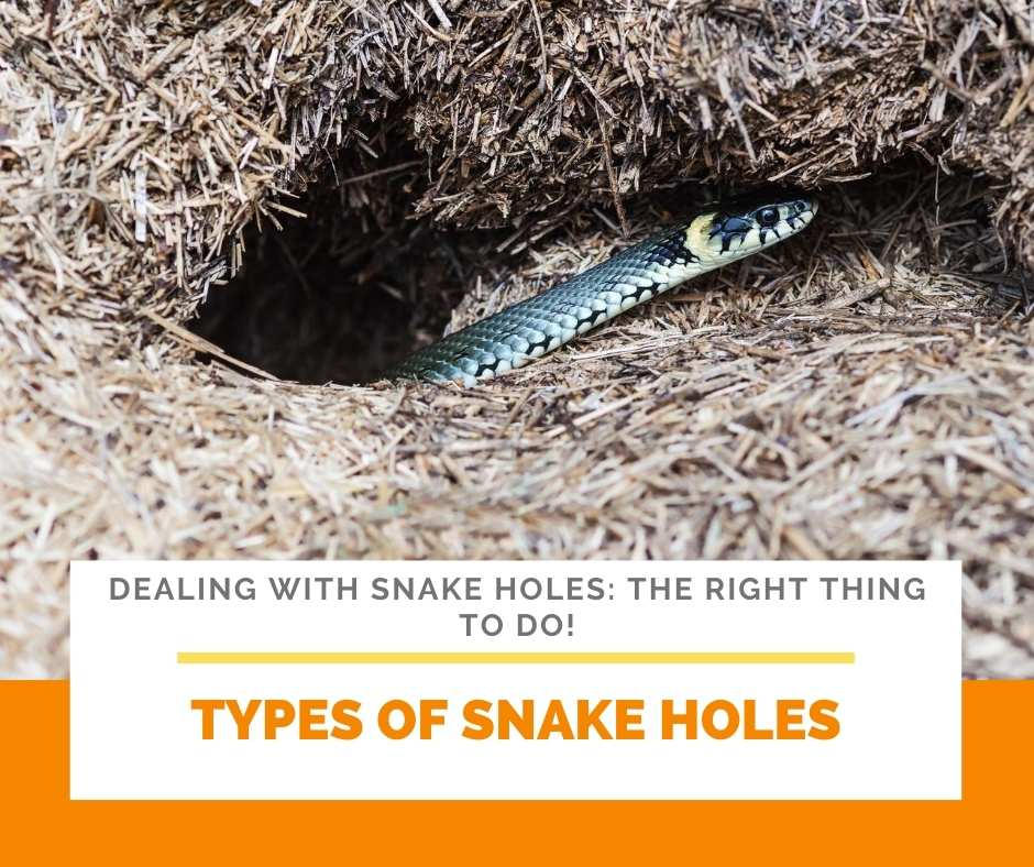 Types Of Snake Holes