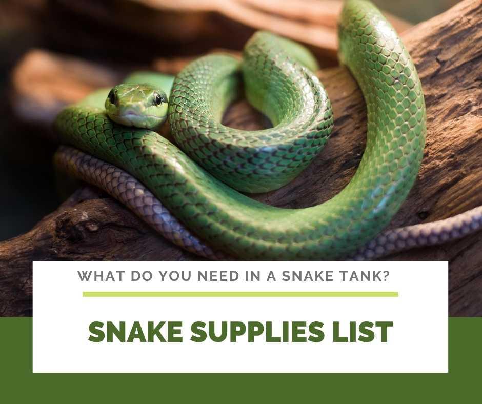 Snake Supplies List