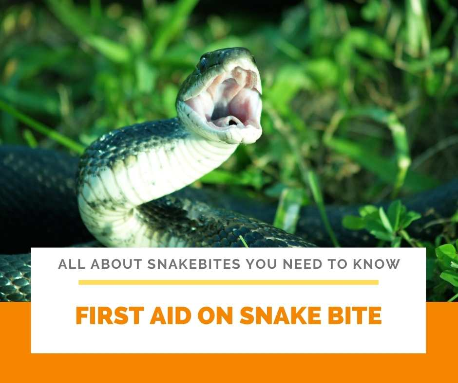 First Aid on Snake Bite