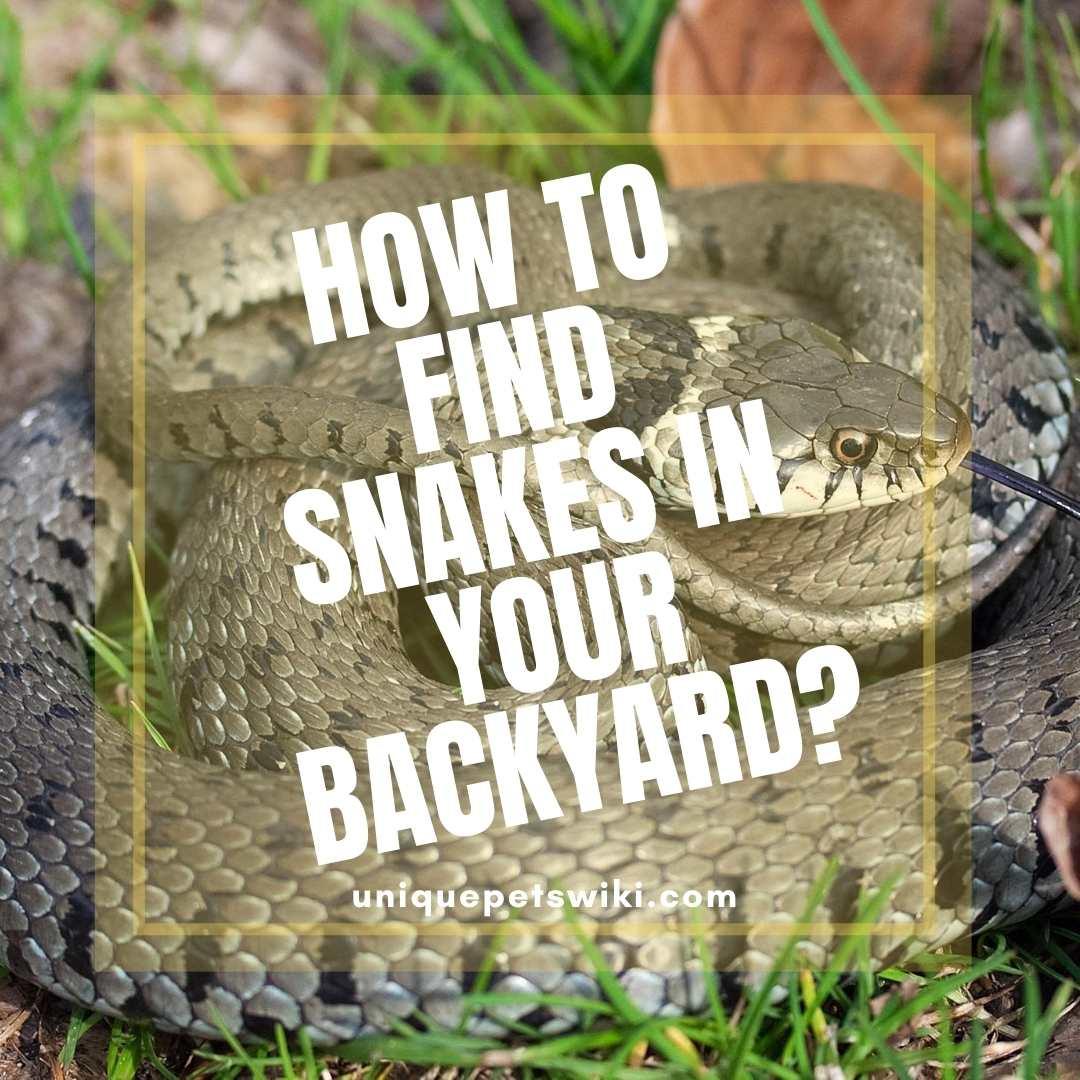 25+ Snake In The Backyard Gif - HomeLooker