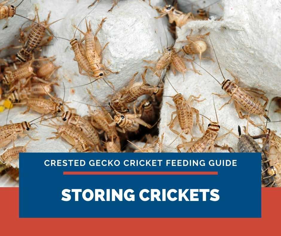 Storing Crickets