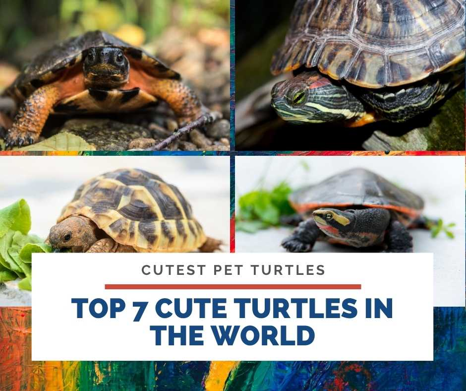 Top 7 Cute Turtles In The World