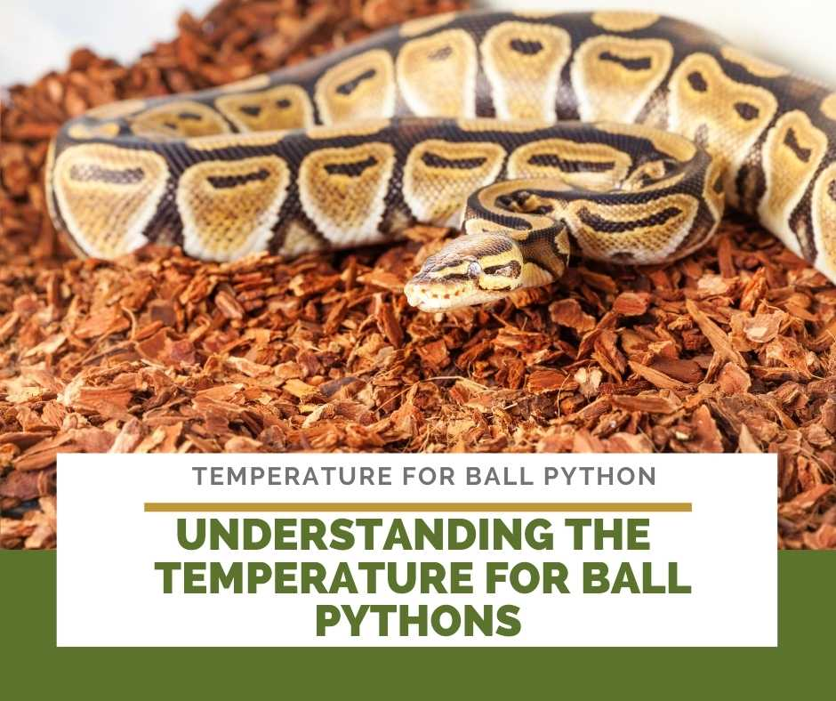 Understand Temperature For Ball Pythons To Successfully Create Ball Python Habitat