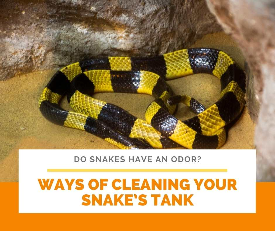 Ways Of Cleaning Your Snake's Tank