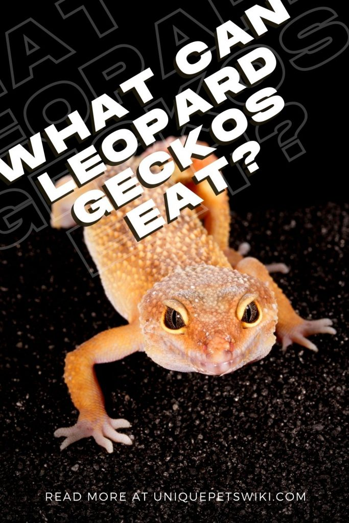 What Can Leopard Geckos Eat Pinterest Pin