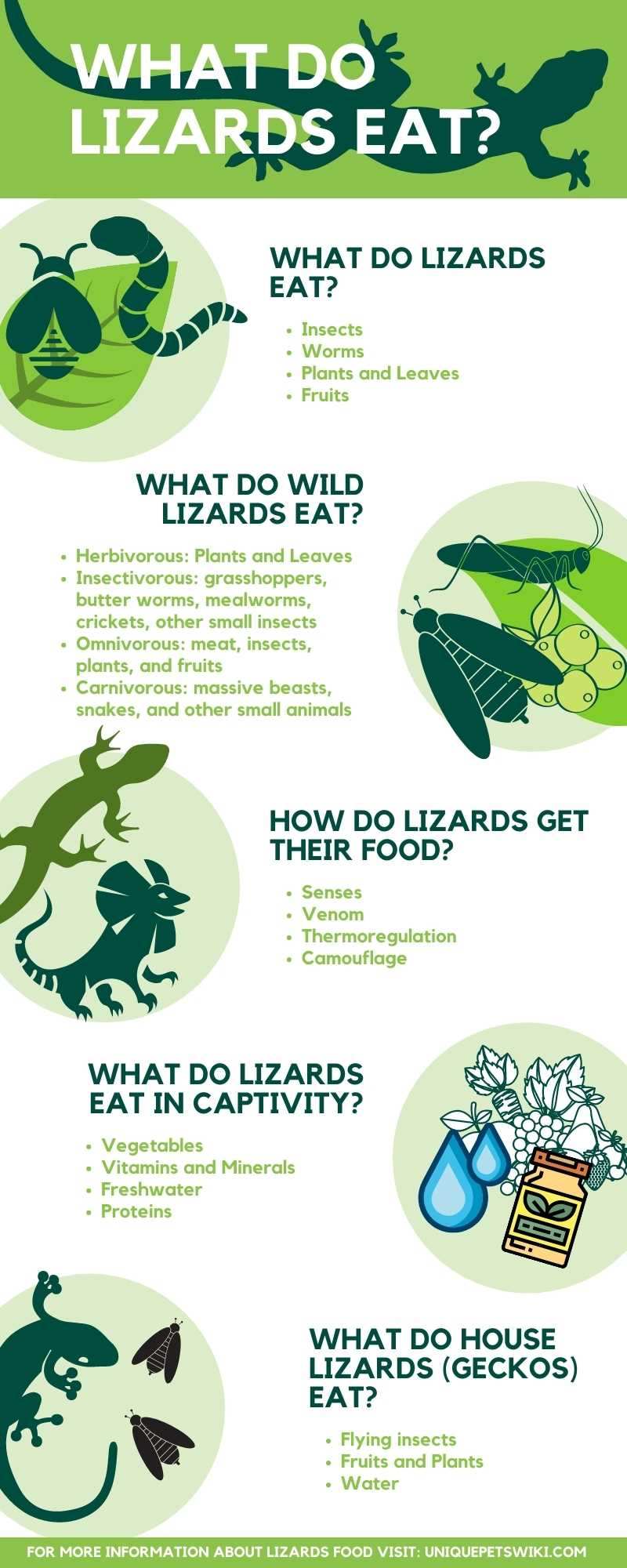 What Do Lizards Eat Infographic
