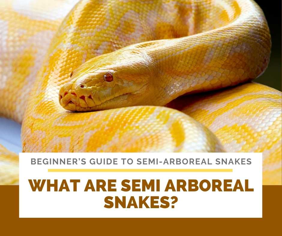 What Are Semi Arboreal Snakes?
