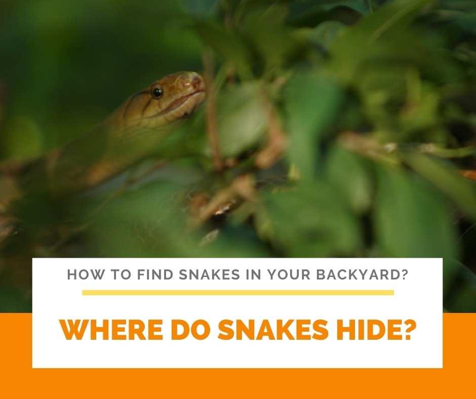 Where Do Snakes Hide?