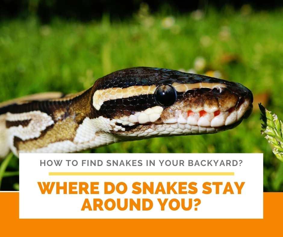 Where Do Snakes Stay Around You?
