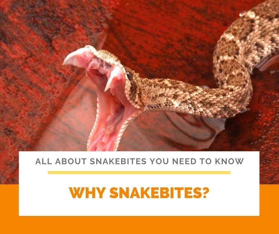 Why Snakebites?