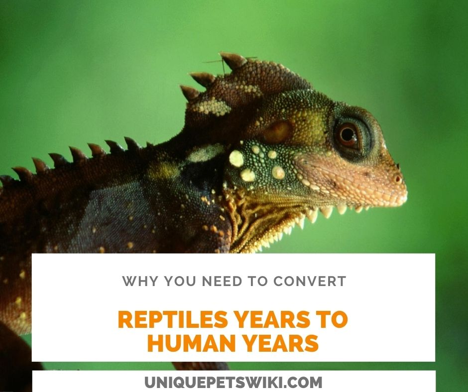 Why You Need To Convert Reptile Years To Human Years