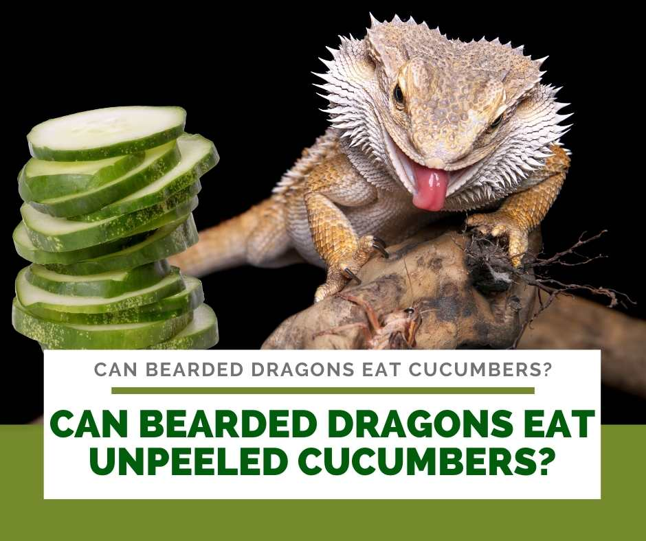 Can Bearded Dragons Eat Unpeeled Cucumbers?