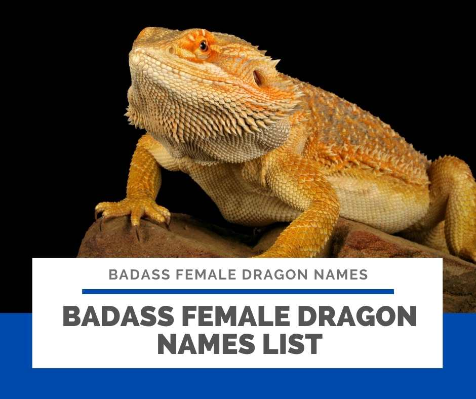 Badass Female Dragon Names List