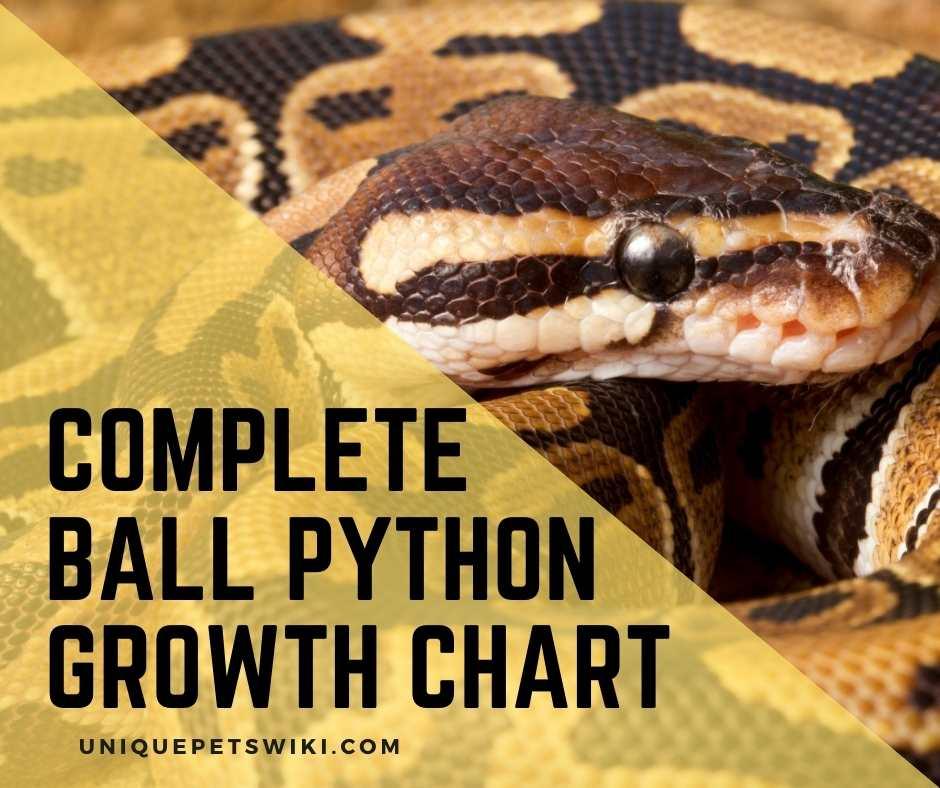 Complete Ball Python Growth Chart