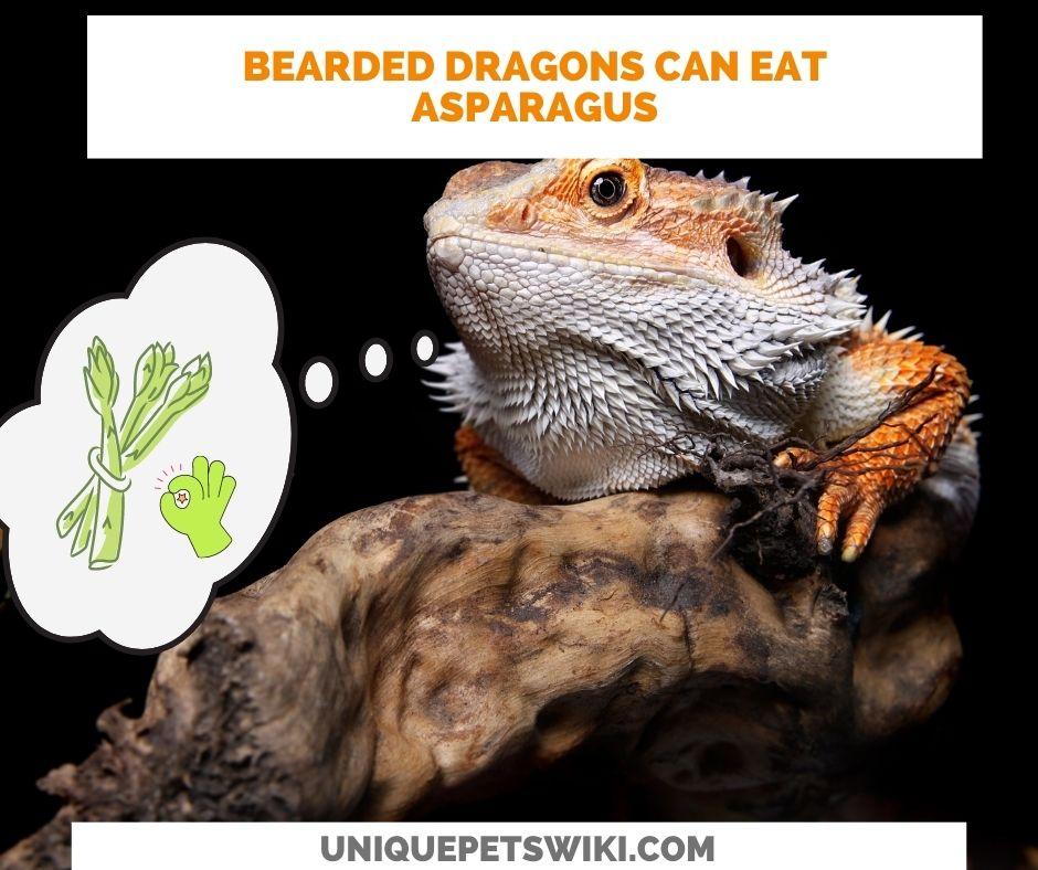 Bearded dragons can eat asparagus