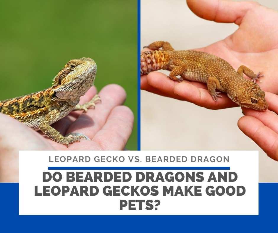 Do Bearded Dragons And Leopard Geckos Make Good Pets?