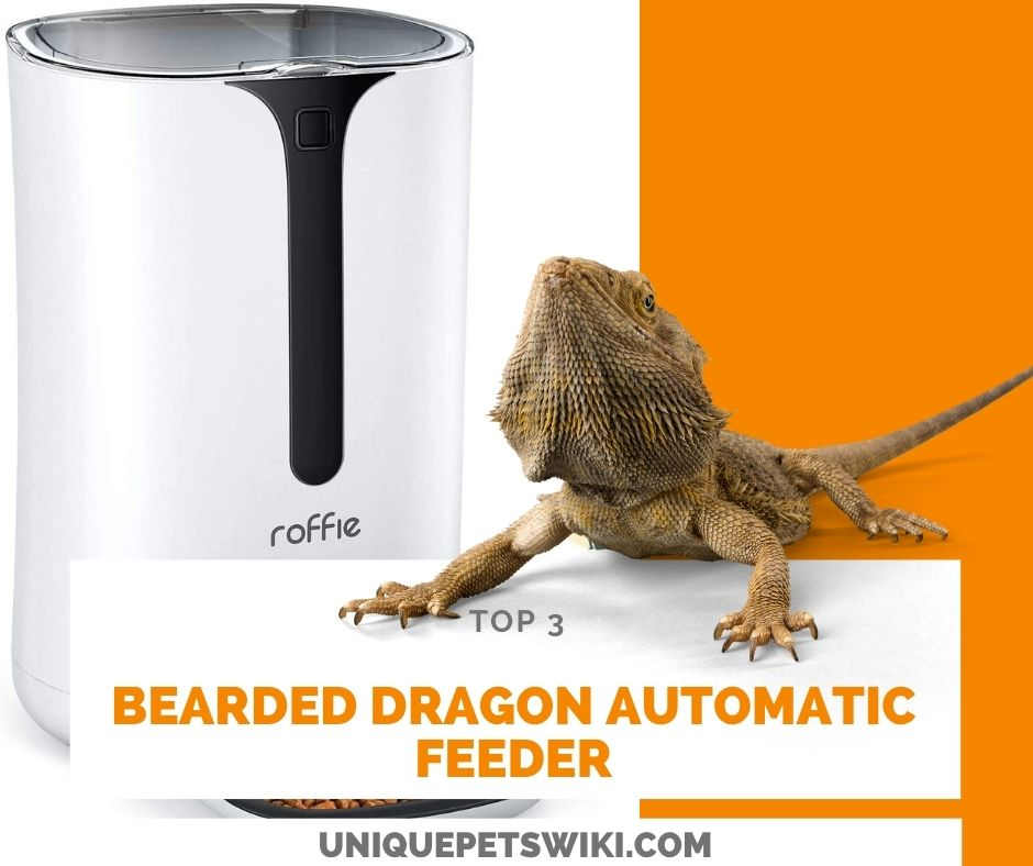 Bearded Dragon Automatic Feeder