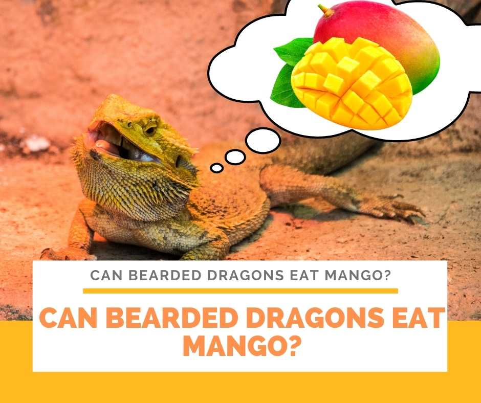 Can Bearded Dragons Eat Mango?