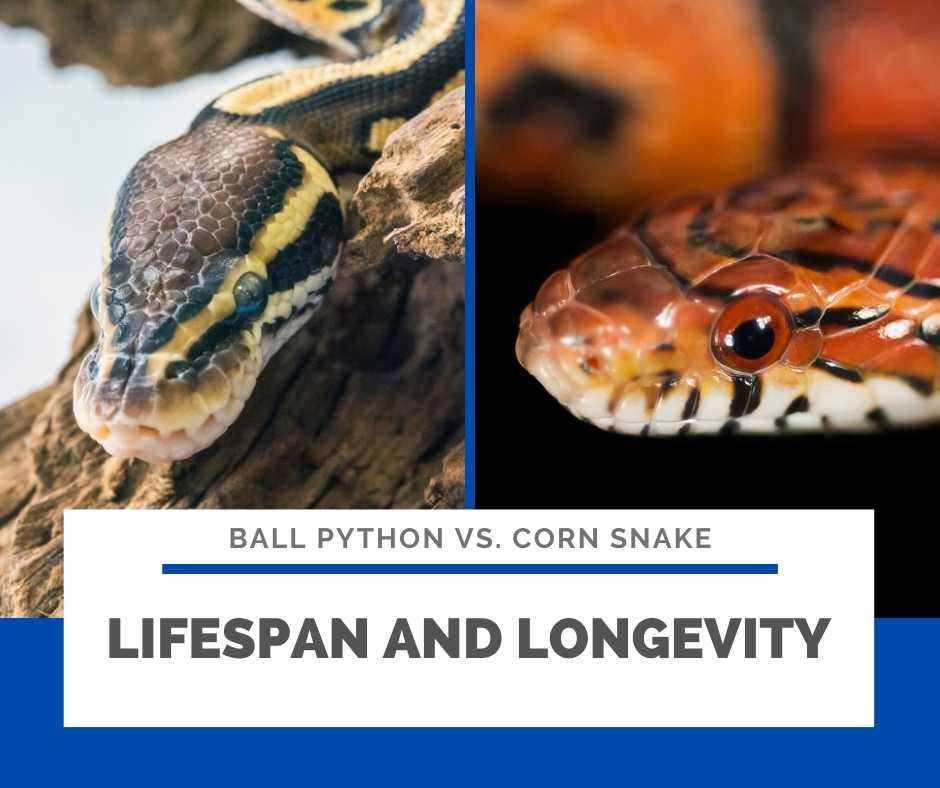 Lifespan And Longevity