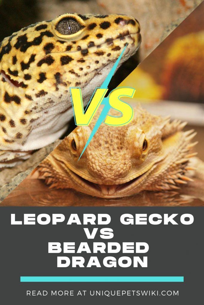Leopard Gecko Vs Bearded Dragon Pinterest Pin