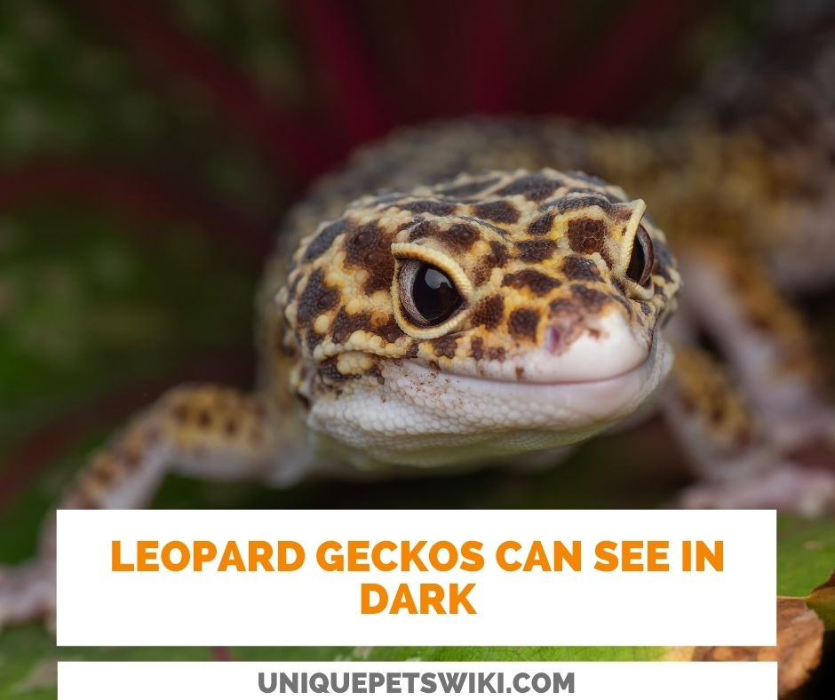 Can Leopard Geckos See In The Dark