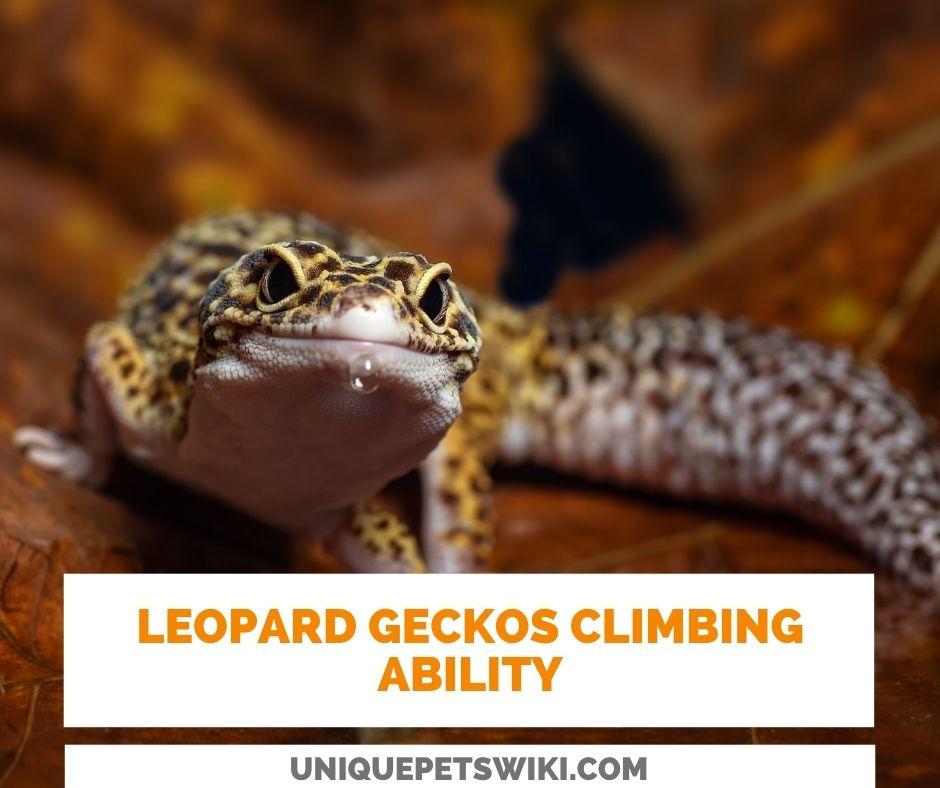 Climbing Ability Of Leopard Geckos
