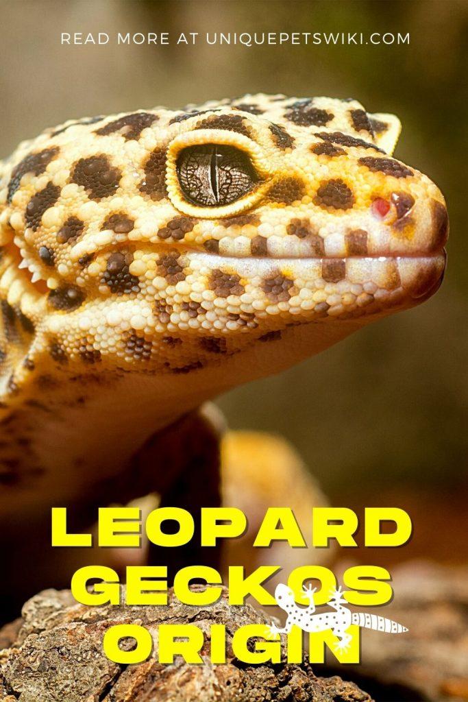 Leopard Geckos Origin Pinterest Pin