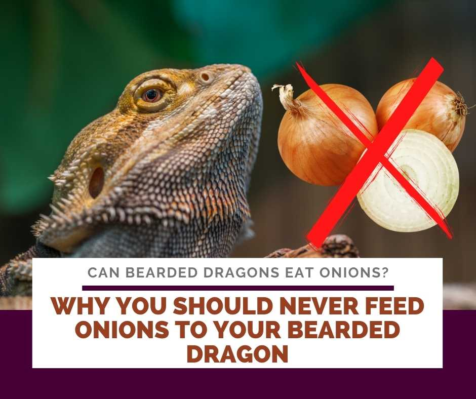 Why You Should Never Feed Onions To Your Bearded Dragon