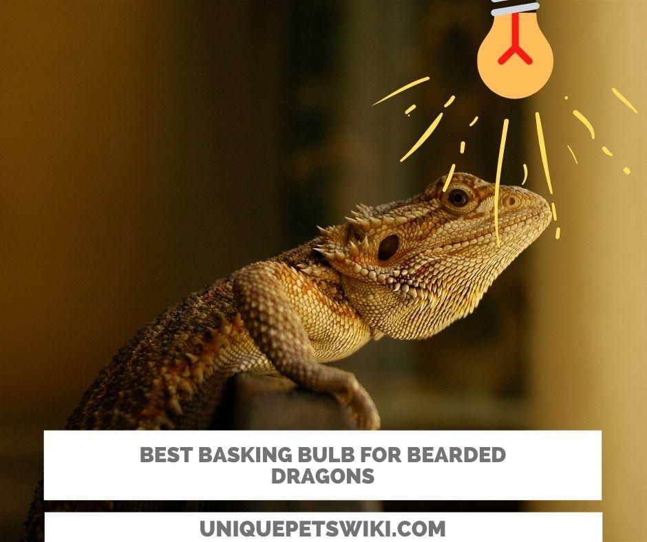 5 basking bulbs for bearded dragons