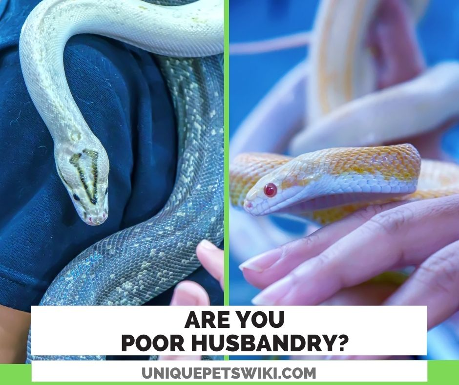 are you poor husbandry on snake care?