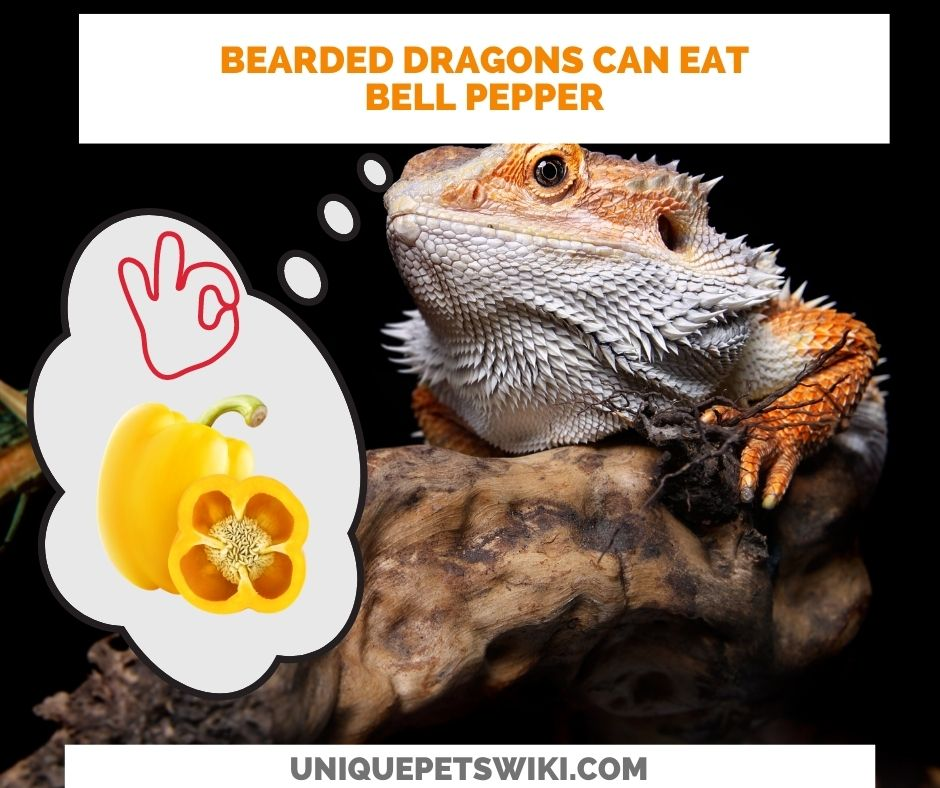 Can Bearded Dragons Eat Bell Pepper? Yes, but some will not even look at it