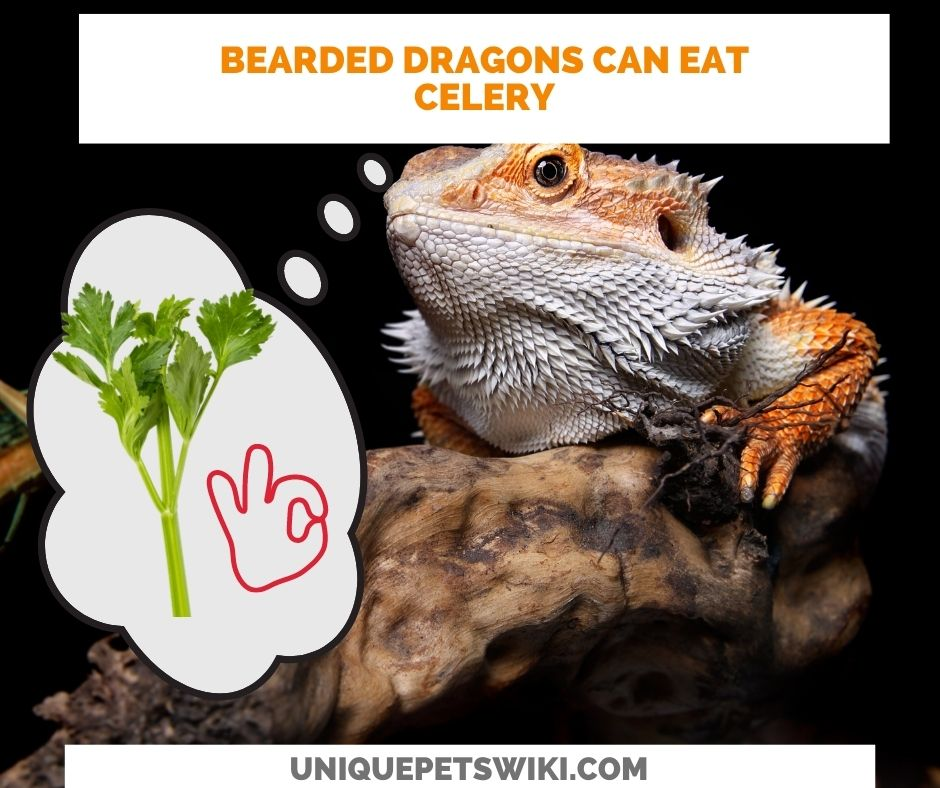 bearded dragons can eat celery