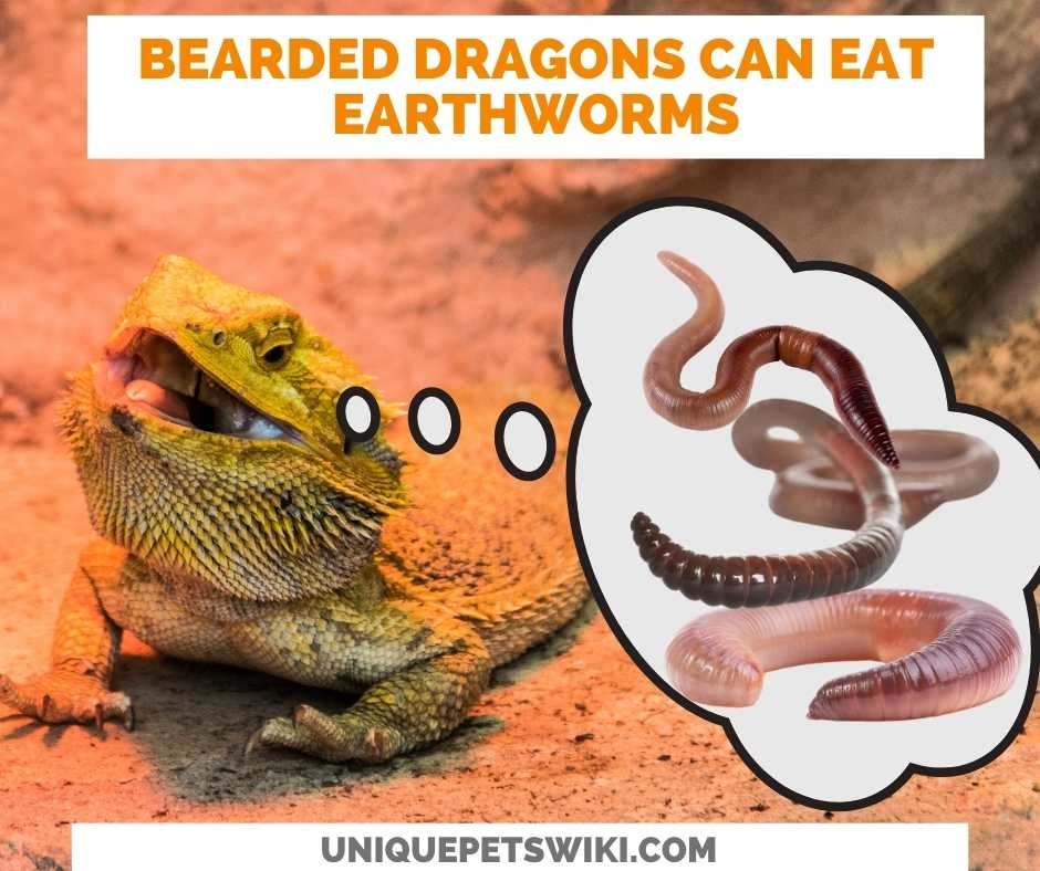 Can Bearded Dragons Eat Earthworms?