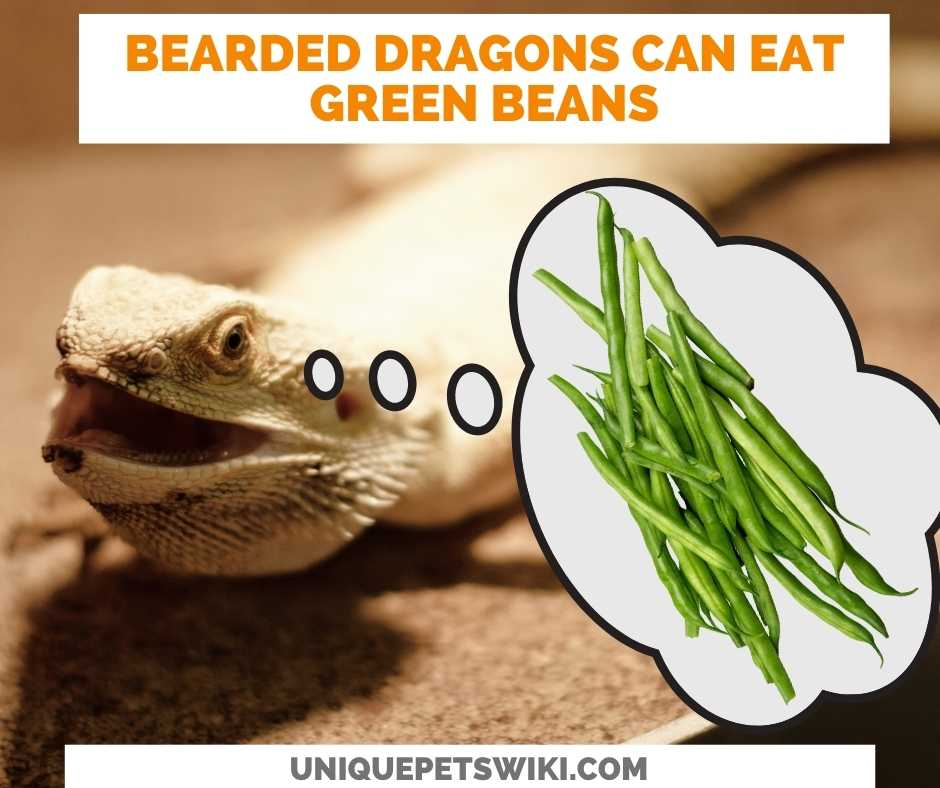 Can Bearded Dragons Eat Green Beans?