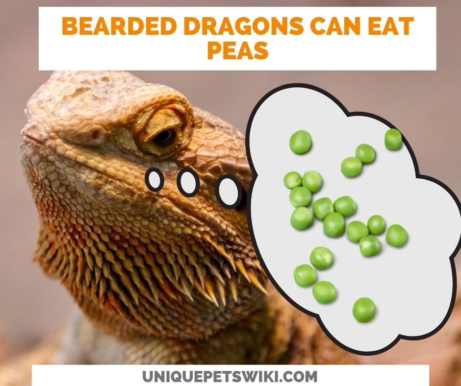 Can Bearded Dragons Eat Peas? Yes they can.