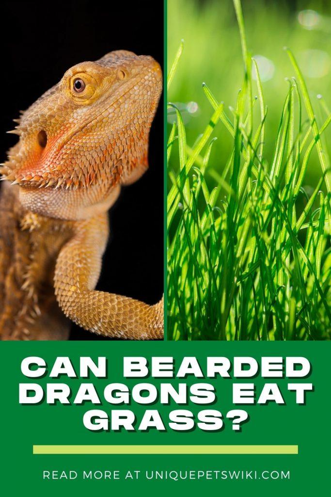 Can Bearded Dragons Eat Grass Pinterest Pin