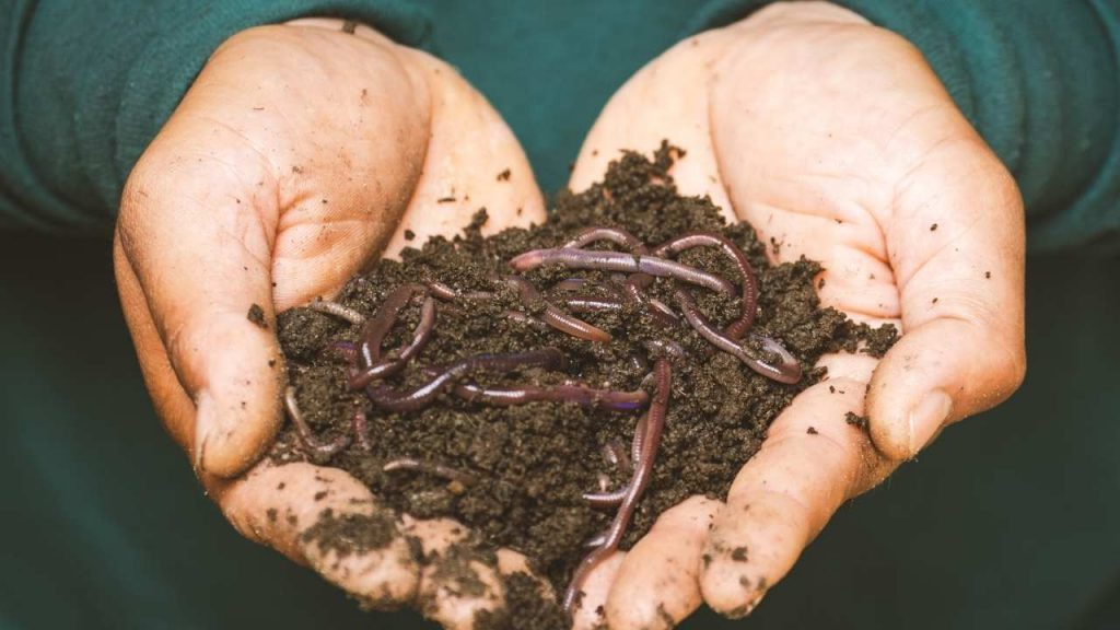 Are Earthworms Nutritious?