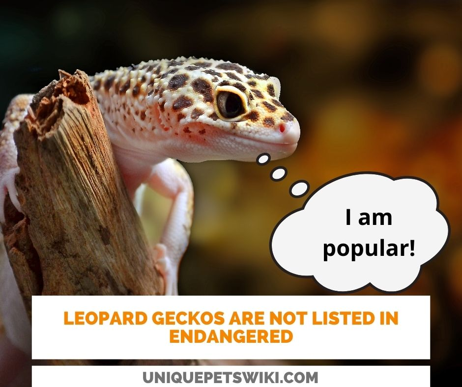leopard geckos are not listed among the endangered animals