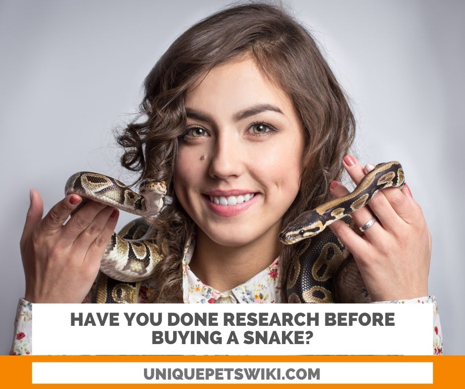 research before buying a snake is a must