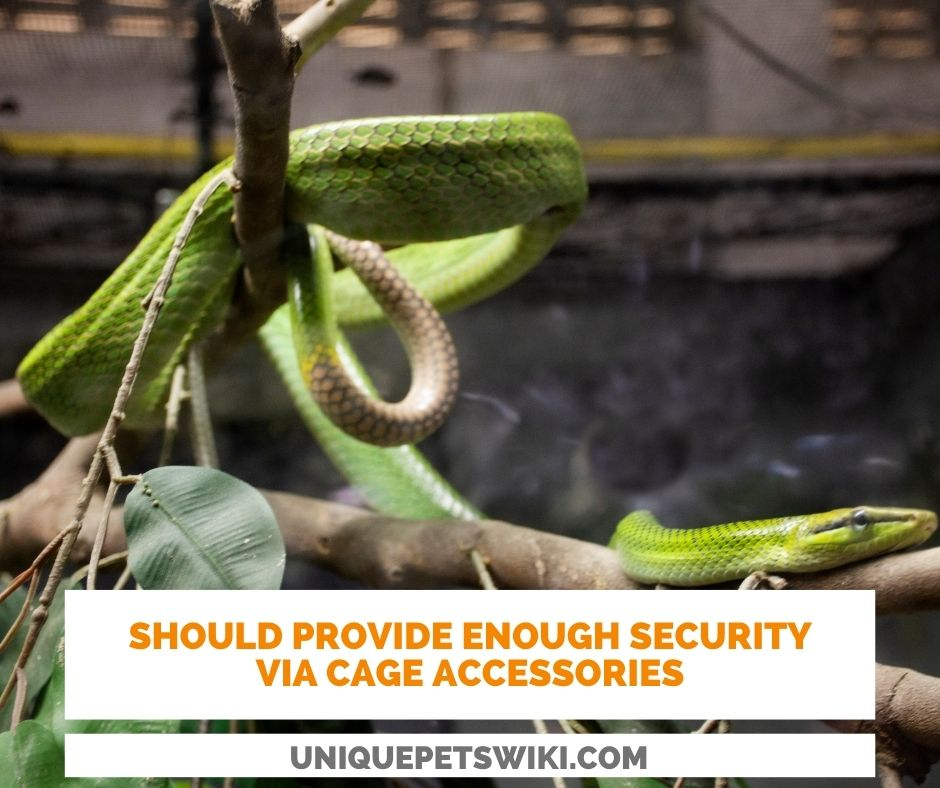 Owners should provide enough accessories in snake cage