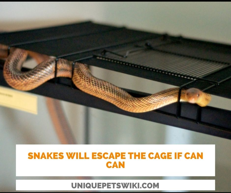 Underestimating The Snake's Ability To Escape