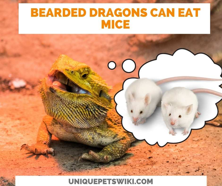 Can Bearded Dragons Eat Mice?