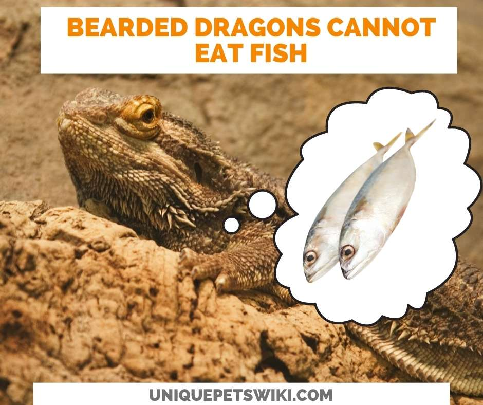 Can Bearded Dragons Eat Fish?